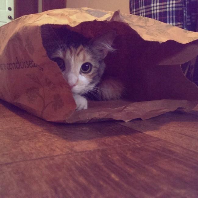 «Эй, это мой пакет! Иди найди себе другой» животные, коты, пакет