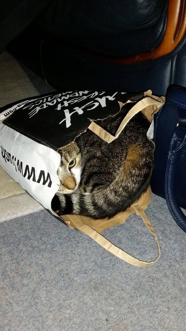«Здесь меня никто не найдет». животные, коты, пакет