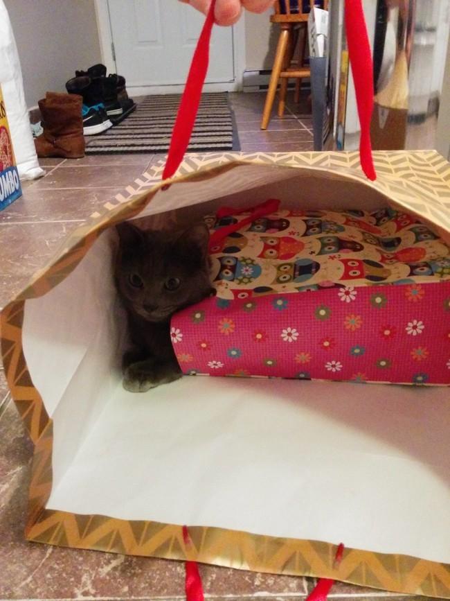 Пакет в пакете – лучшее место на земле. животные, коты, пакет