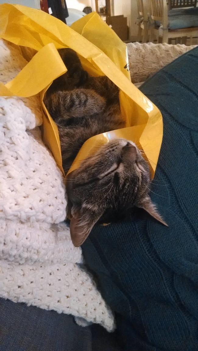 В мечтах о хорошем и веселом шоппинге. животные, коты, пакет
