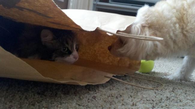 «Нет, Фил, тебе не понять» животные, коты, пакет