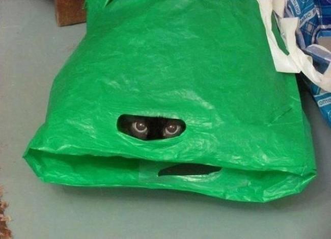 «Смотри! Я лягушечка! Ква-ква!» животные, коты, пакет