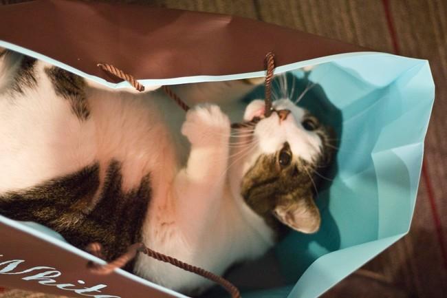 Чем круче пакет, тем интереснее его содержимое. животные, коты, пакет