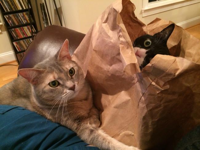 «Эй, парень, верни пакет. Он срочно нужен мне!» животные, коты, пакет