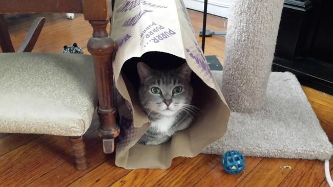 «Игрушка? Какая еще игрушка?» животные, коты, пакет