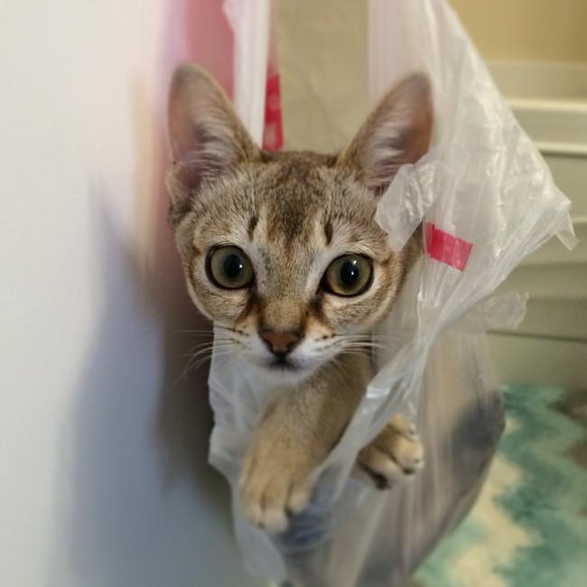 «Ты засыпаешь… медленно засыпаешь… тебе не нужен этот пакетик… он теперь мой…» животные, коты, пакет