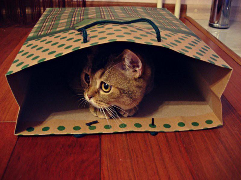 Коты, открывшие для себя «мир пакетов» животные, коты, пакет