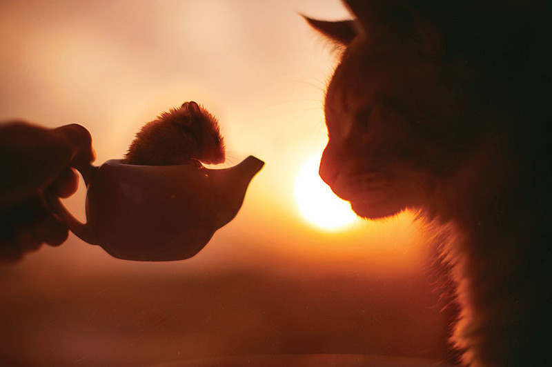 Русский кот по имени Котлета покоряет интернет: рыжий всегда в моде! животные, кот котлета