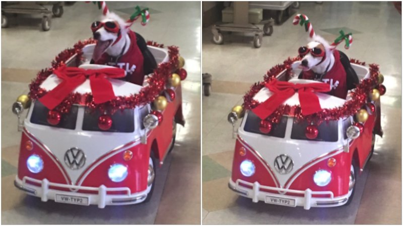 Собачка несет дух Рождества и поддерживает пациентов больницы больничные клоуны, всем добра, собака-помогака