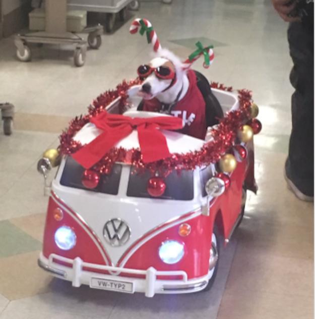 Празднично украшенный автомобиль и нарядный щенок вызывают только положительные эмоции больничные клоуны, всем добра, собака-помогака