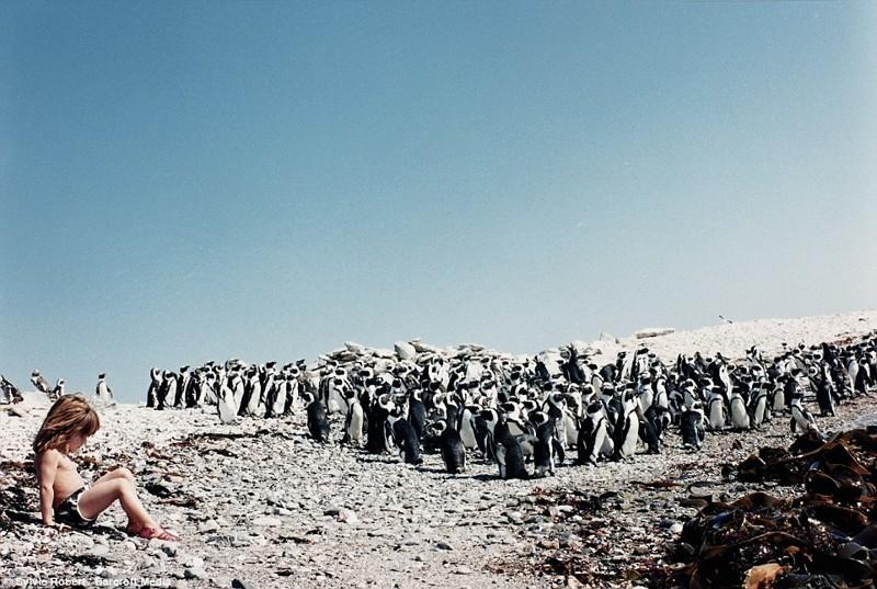 """Среди колонии пингвинов в Намибии –Типпи тут шесть лет (эти невероятные фото включены в книгу """"Типпи: моя книга об Африке"""") африка, маугли, ребята и зверята, фотографии животных"""