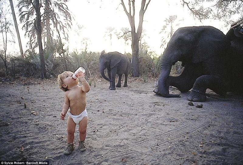 Типпи всего полтора года: мама сфотографировала ее на фоне стада слонов в Ботсване африка, маугли, ребята и зверята, фотографии животных