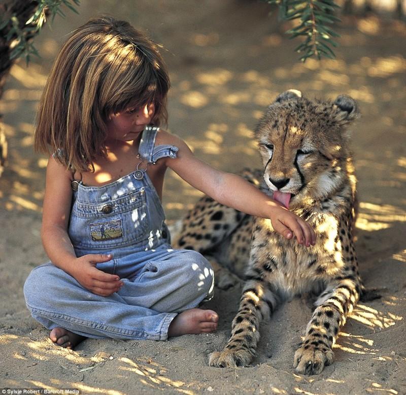 Юный гепард (Намибия) африка, маугли, ребята и зверята, фотографии животных