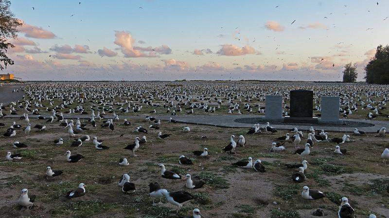 В заповедник ежегодно прилетают сотни тысяч пар темноспинных альбатросов альбатрос, животные, яйцо