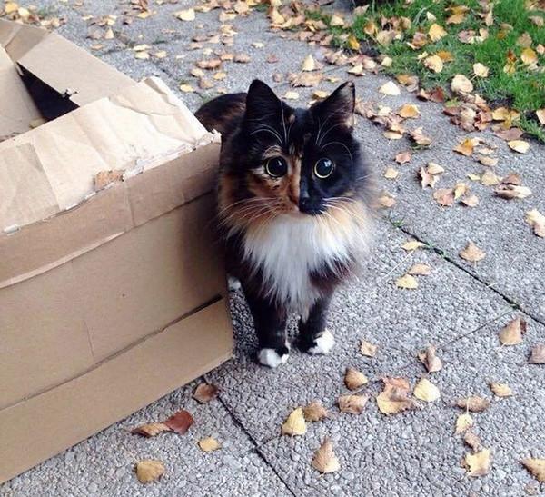 Раньше у Сандры жила кошка ослепшая с возрастом, поэтому найти общий язык с Жасмин не составило труда животные, кошка, приют
