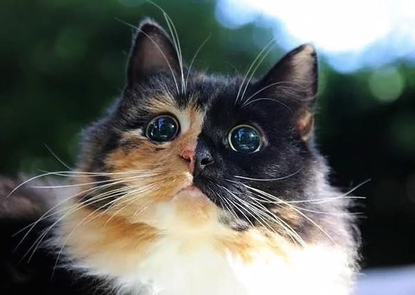 Недоедание могло стать причиной ее слепоты, она боялась людей и других животных, но с Сандрой у нее полное взаимопонимание =) животные, кошка, приют