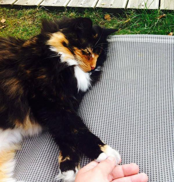 Это Жасмин, слепая кошка, увиденная в одном из приютов во Франции животные, кошка, приют