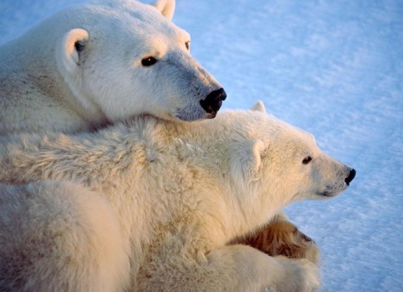 Мамы бывают разные: белые, чёрные, красные животные, тигры