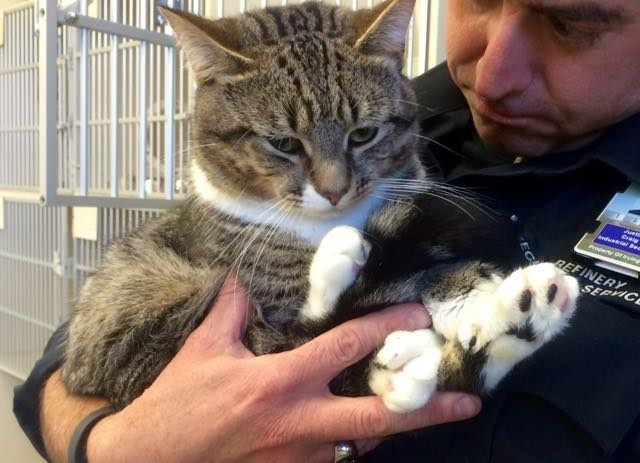 Когда Джастин Крейг впервые увидел кота по имени Фил, он ему настолько понравился, что мужчина сразу решил забрать его домой. большие лапы, животные, кот, приют