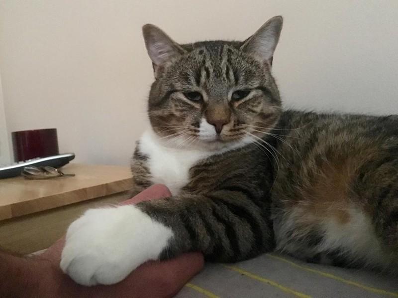 Приютский кот с огромными лапами изменил жизнь одного мужчины большие лапы, животные, кот, приют