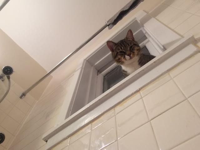 «Лежал себе спокойно в ванне, и вдруг…» Конец личному пространству! большие лапы, животные, кот, приют
