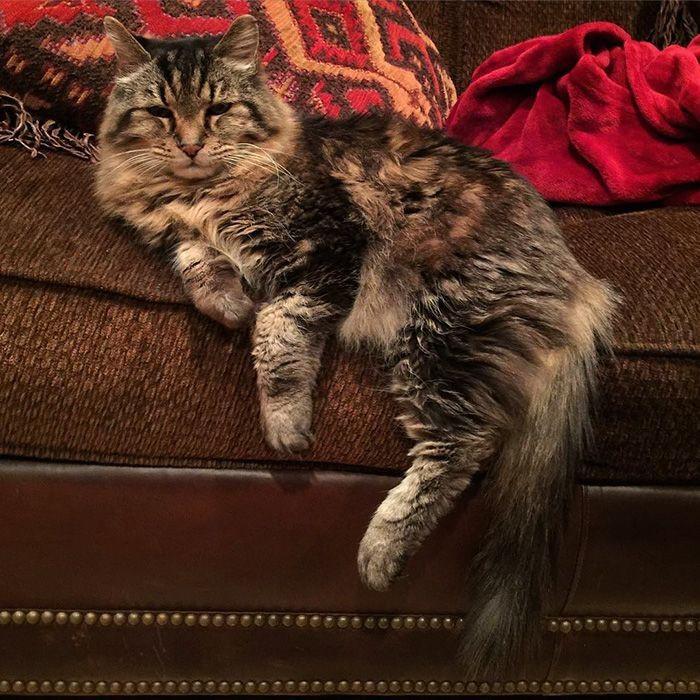 Вельвет — самый старый 26-летний кот, живущий полной жизнью вельвет, животные, коты