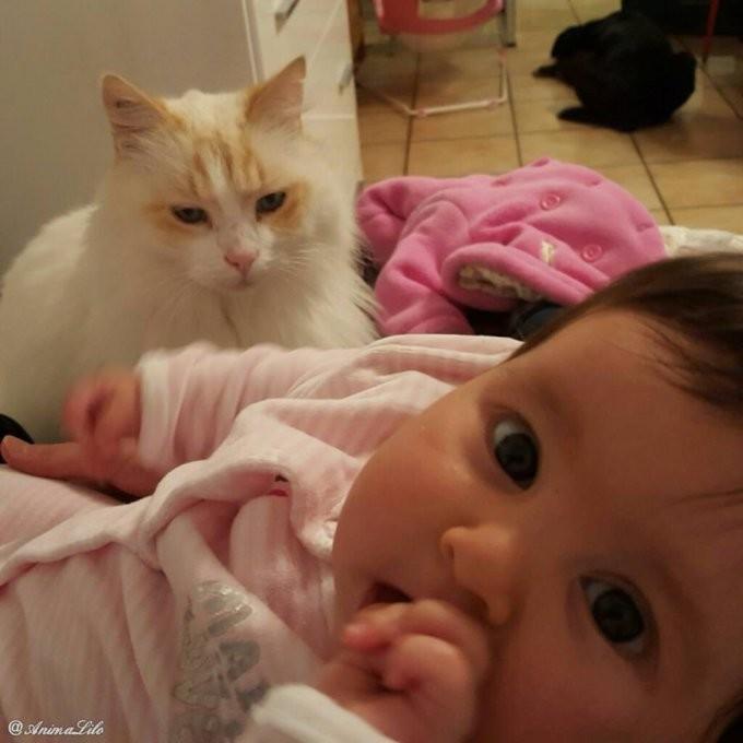 Кошка полюбила малыша еще до рождения и превратилась в отличную няньку  дети, животные, кот, кошка, мать