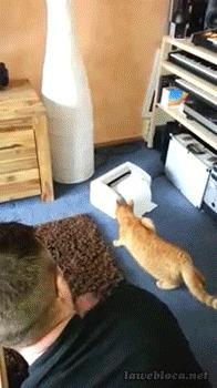 животные, коты, юмор