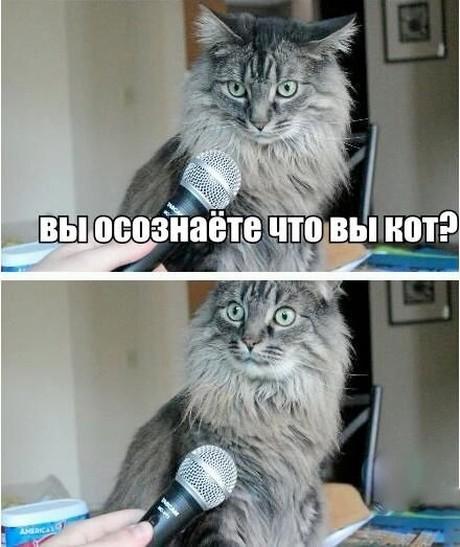 1. Экзистенциальный кризис подоспел животные, коты, юмор