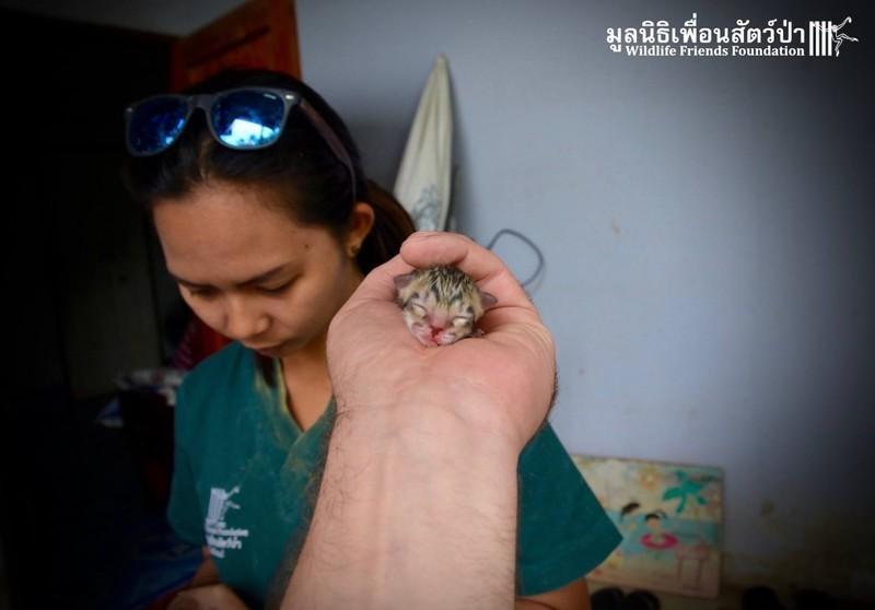 Крошечный котенок, найденный на улице, оказывается не тем, кем казался животные, котенок, находка