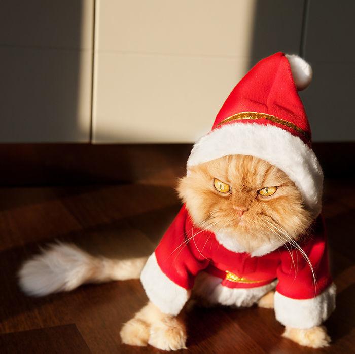 Ненавижу вас! Свободу котам! животные, мелкие пакости, смешно, фото