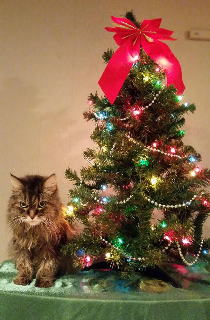 Очень недовольный котик животные, мелкие пакости, смешно, фото
