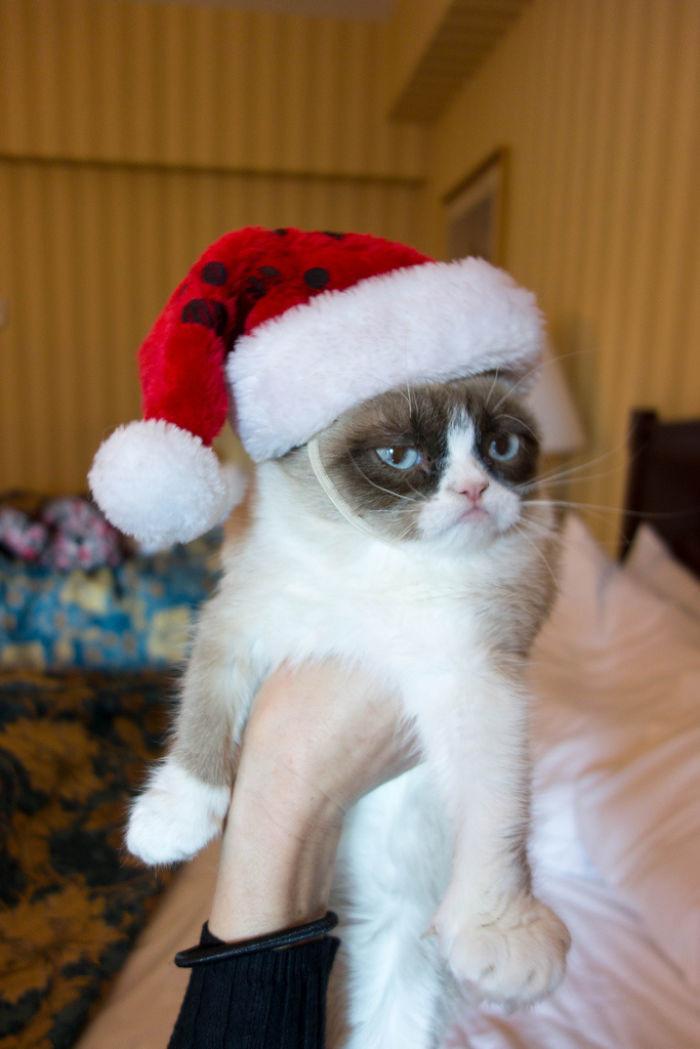 Жизнь - боль... то есть, я хотел сказать, счастливого нового года, да животные, мелкие пакости, смешно, фото