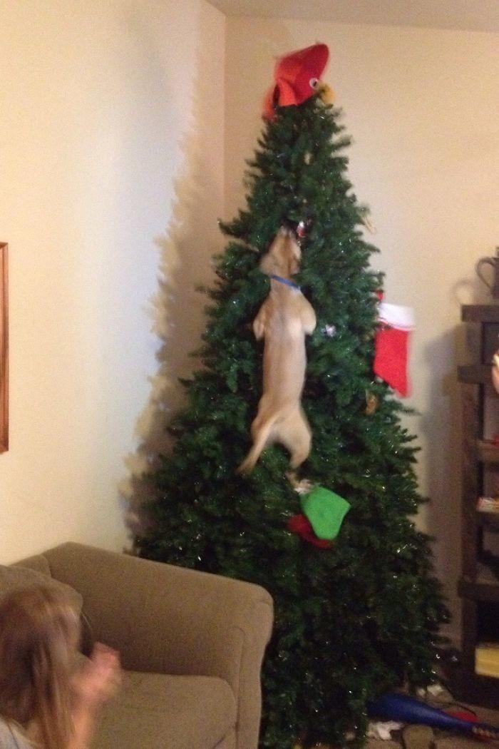 Кот плохому научил животные, мелкие пакости, смешно, фото