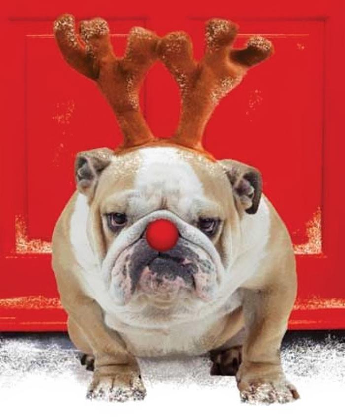 Плохой Санта животные, мелкие пакости, смешно, фото