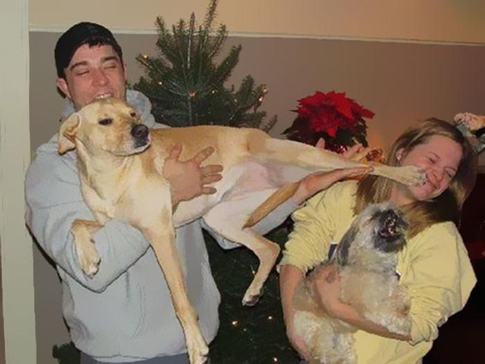 Фото на память о новогодних праздниках животные, мелкие пакости, смешно, фото