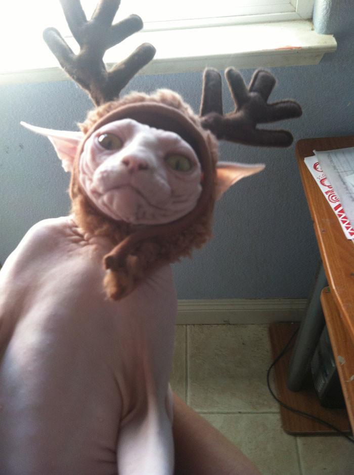 Несчастный олень животные, мелкие пакости, смешно, фото
