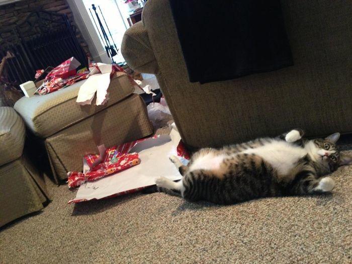 Дети так ждали утра, чтобы развернуть подарки! Но кот успел раньше животные, мелкие пакости, смешно, фото
