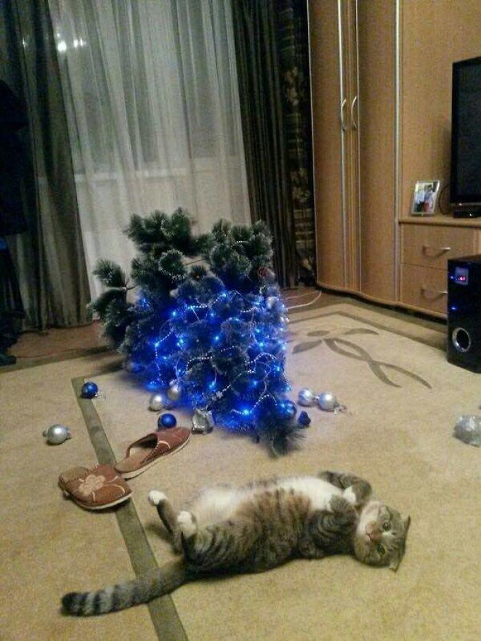 Новый год не придет животные, мелкие пакости, смешно, фото