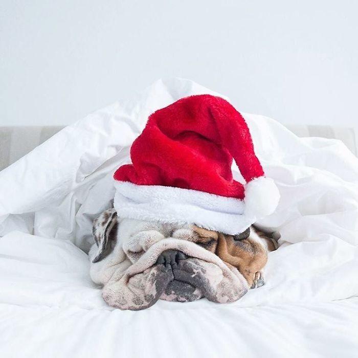 Зима, холода, одинокие дома... животные, мелкие пакости, смешно, фото