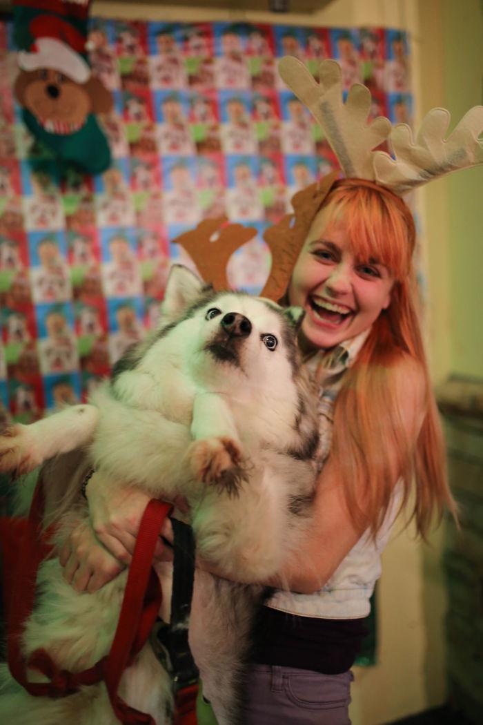 Кажется, роль оленя ему не нравится... животные, мелкие пакости, смешно, фото