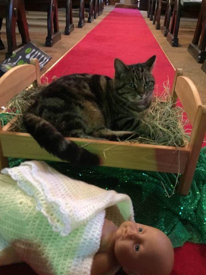 Кошка, живущая при церкви, решила, что мягкая постелька ей нужней, чем младенцу Иисусу животные, мелкие пакости, смешно, фото