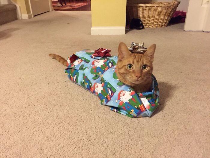 Значит, теперь я - подарок? Погодите, скоро увидите, что я - не подарок! животные, мелкие пакости, смешно, фото