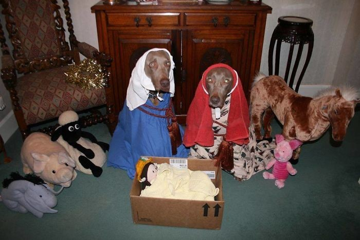 Святое семейство животные, мелкие пакости, смешно, фото
