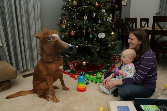 Лошадку жалко! животные, мелкие пакости, смешно, фото