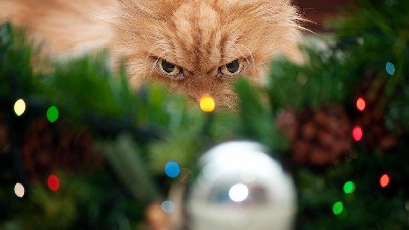 Домашние животные, которые просто ненавидят новый год! животные, мелкие пакости, смешно, фото