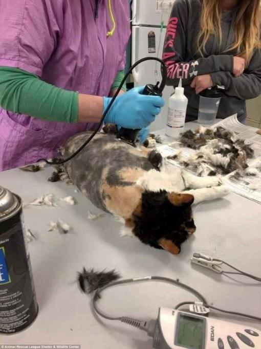 Ветеринарам еще не приходилось иметь дела с кошками в таких дредах дреды, кошка, постричь