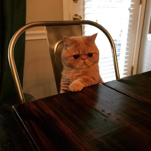 Присаживайтесь, молодой человек, нам нужно серьезно поговорить кошки, смешные  кошки, смешные животные, собаки