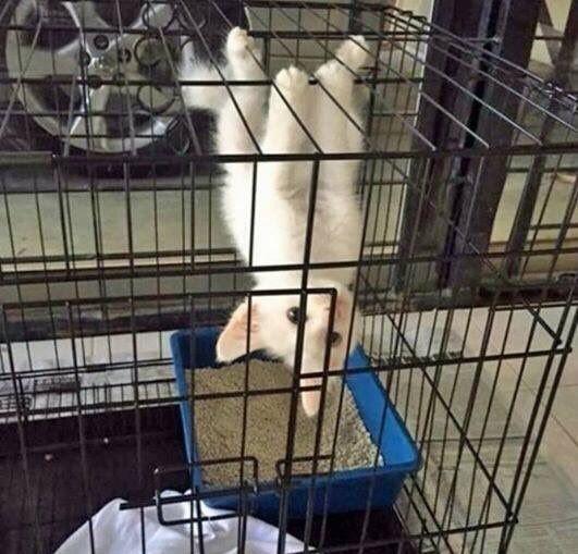 Занятия гимнастикой полезны для  моего здоровья кошки, смешные  кошки, смешные животные, собаки