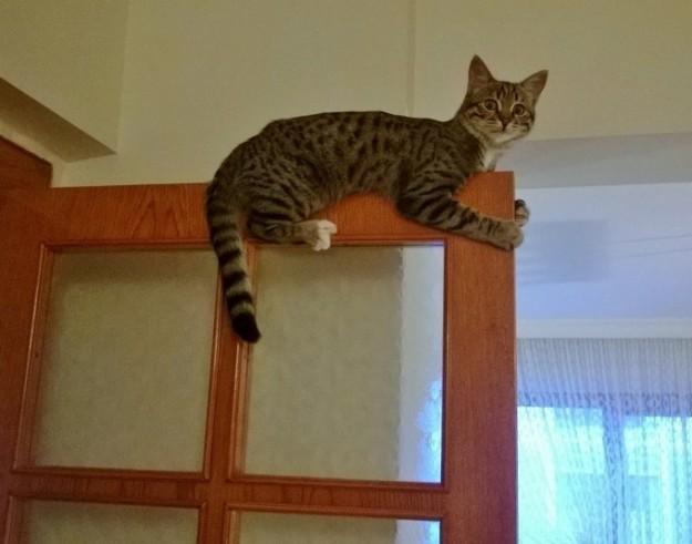 Надеюсь, вы догадаетесь не хлопать дверью? кошки, смешные  кошки, смешные животные, собаки